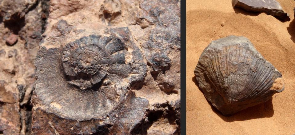 Je n'ai pas grand chose à faire d'un fossile de coquillage, même très beau, une véritable œuvre d'art sans doute, trouvé au milieu d'un désert où autrefois il y avait une mer.