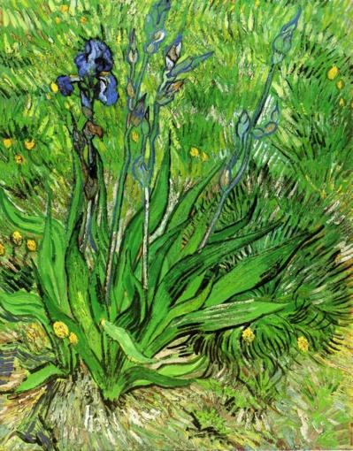 Vincent van Gogh L'Iris