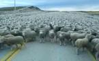 """""""revenons à nos moutons"""""""